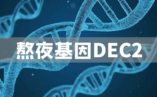 熬夜基因DEC2