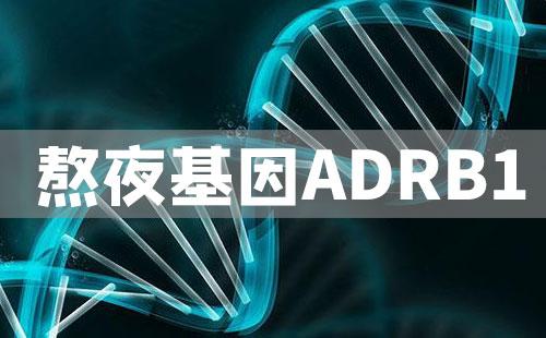 熬夜基因ADRB1