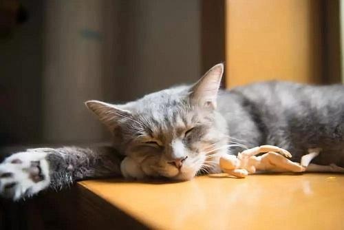 关于睡眠的10个错误认知——你被骗了吗?
