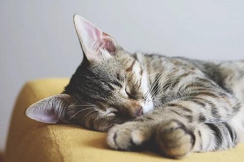 关于睡眠的10个错误认知